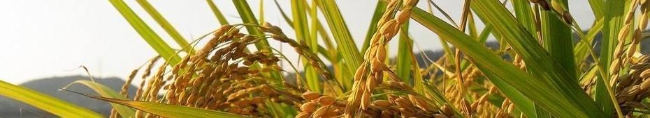 Boeken over boeren, boerderijen en landbouwgeschiedenis